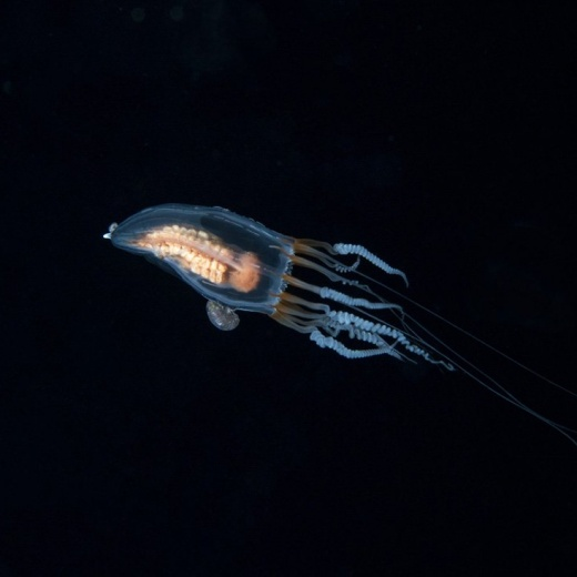 Unknown Jellyfisj