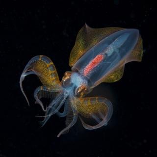 Unknown Squid Defense Mode