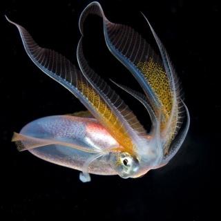 Unknown Squid Displaying Tentacfles